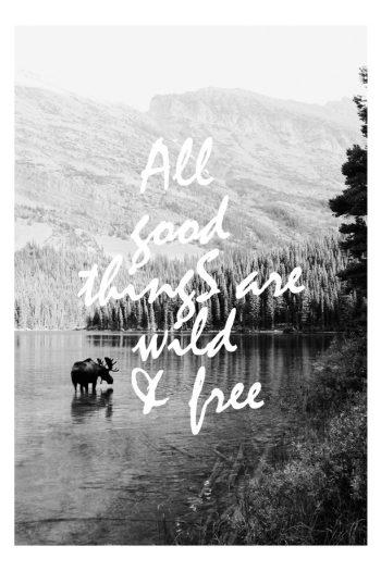 Wilde & Free